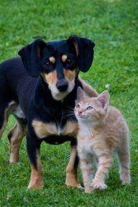 animal de compagnie chat et chien