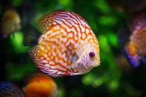 animal de compagnie poisson