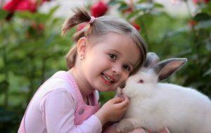 animal de compagnie lapin